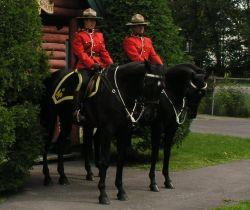 Jarka Jarvis: Dobrovolníkem u Kanadské Jízdní Policie