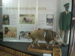 Legendární služební divoké prase Luise sloužilo věrně policii v Dolním Sasku