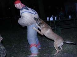Jsou policisté, kteří se psy dělají více, než jim velí předpisy..