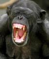 Jako stádo opic