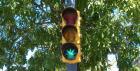 Marihuana a řízení