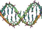 Uchovávání DNA bez prokázané viny? Protizákonné...
