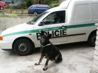 Ztraceného muže zachránil čenich policejního psa
